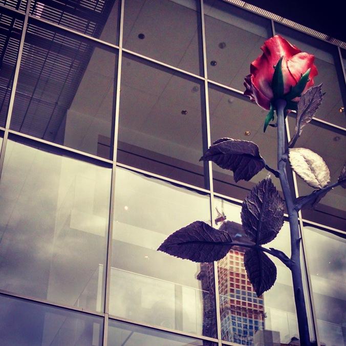 Rose_MOMA